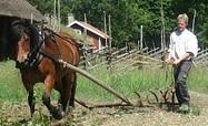 Plough Horse